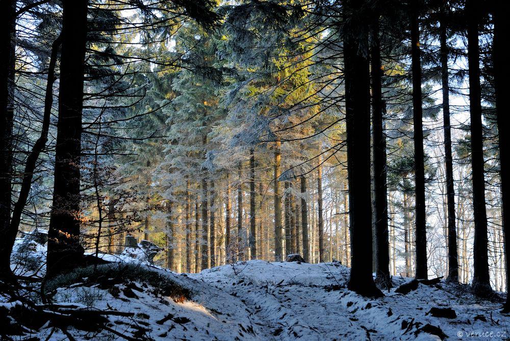 Orlické hory v zimě